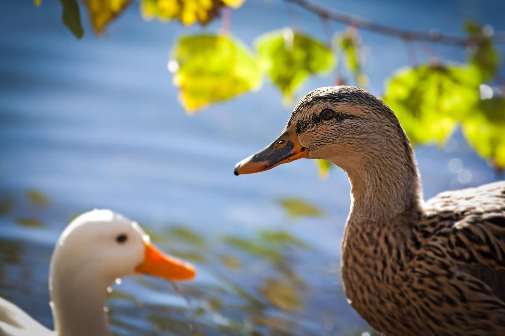 oasi campagn. 03. dic.2012 5D-4