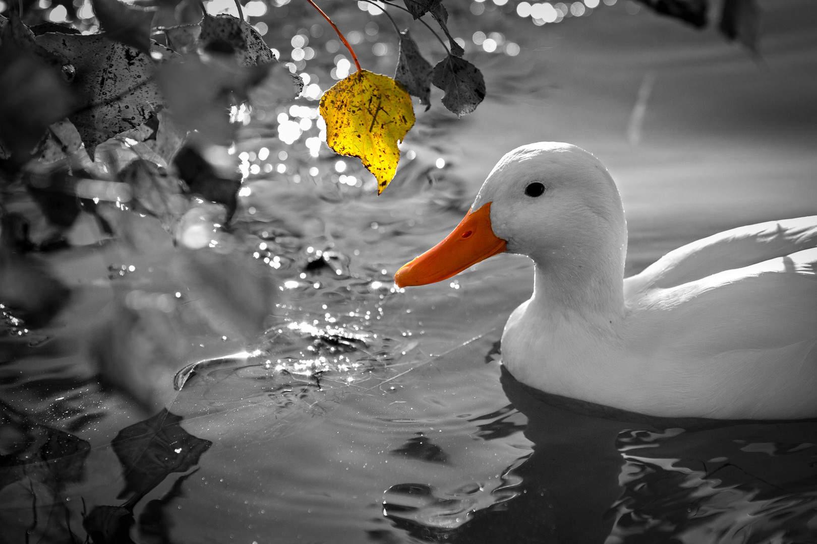 oasi campagn. 03. dic.2012 5D-5